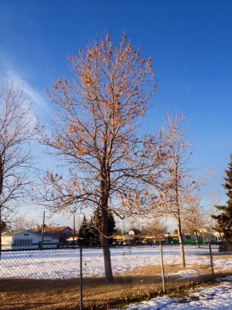 Spruce community field