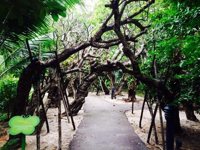 Frangipani tunnel