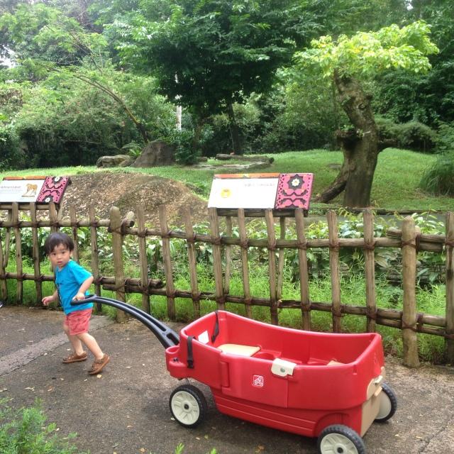 Matthew pulling the wagon
