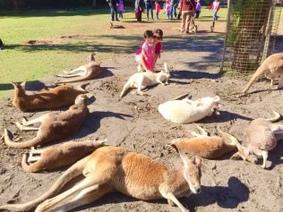 RE's first encounters with the kangaroos