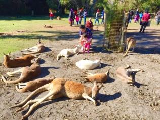 JE patting kangaroos