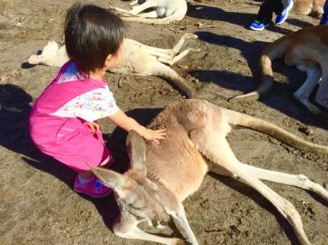 Little E patting a kangaroo