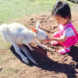 Little E feeding an albino kangaroo