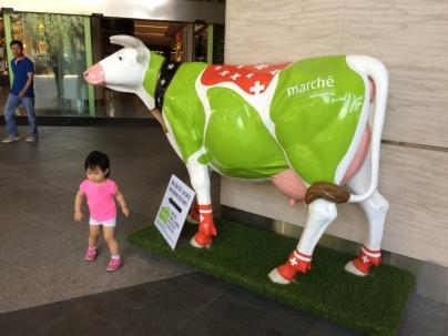 Marche cow
