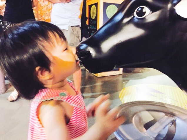 Kissing the cow!