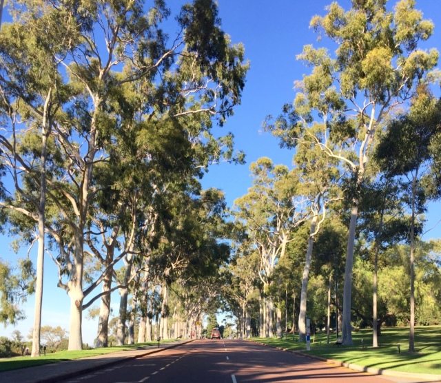 Ghost gum-lined road