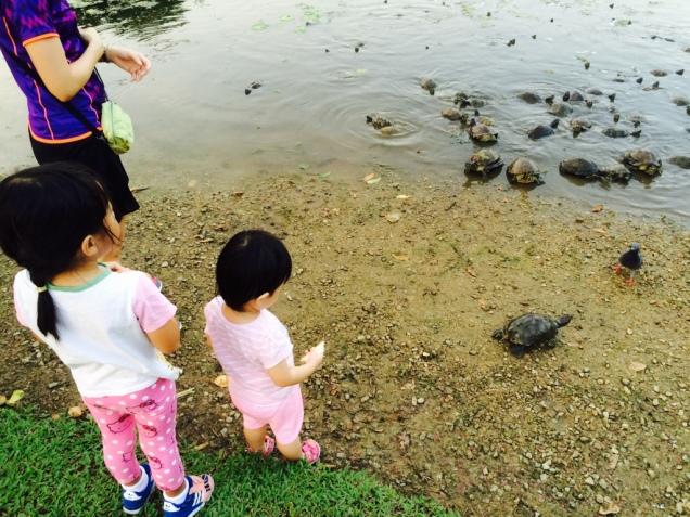 Turtles in Eco Lake