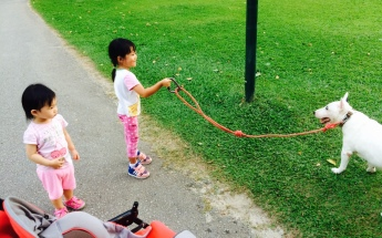Brave LT holding the leash