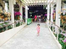 Little E at SBG orchid display