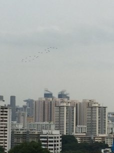 "RSAF's Salute-to-Nation with the ""50"" formation, comprising 20 F-16s."
