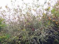An apple tree in our backyard!