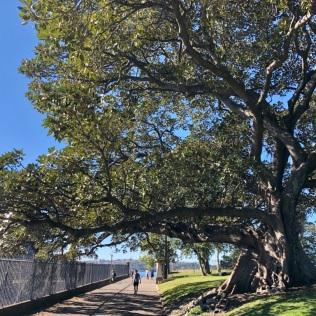 Botanic Garden of Sydney