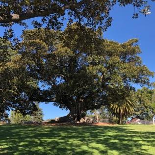 Royal Botanic Garden of Sydney