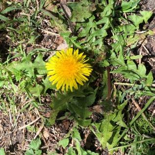 Wild flower in Sydney