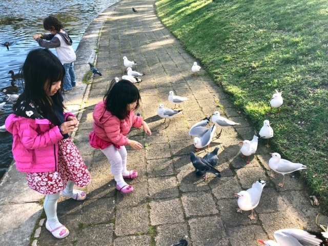 Birds in Victoria Park