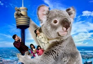 King Koala!