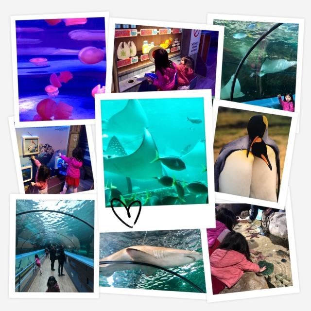 SEALife Collage.jpg