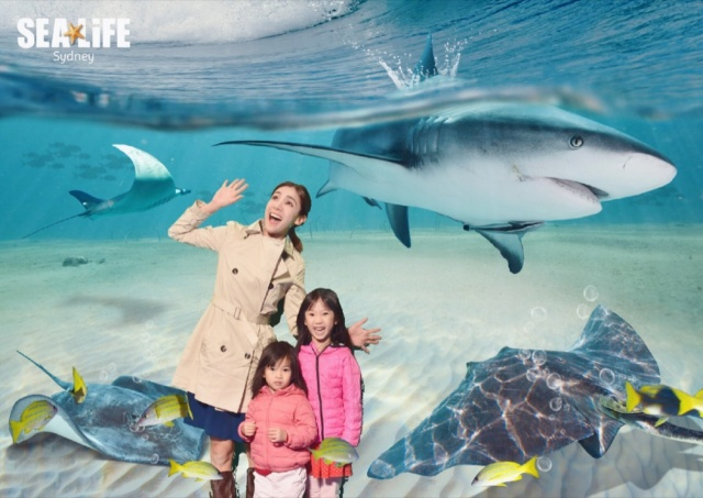 SeaLife pic 3